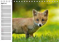 Auf den Spuren der Stadtfüchse (Tischkalender 2019 DIN A5 quer) - Produktdetailbild 4