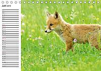 Auf den Spuren der Stadtfüchse (Tischkalender 2019 DIN A5 quer) - Produktdetailbild 6