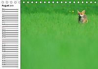 Auf den Spuren der Stadtfüchse (Tischkalender 2019 DIN A5 quer) - Produktdetailbild 8