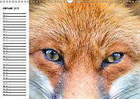 Auf den Spuren der Stadtfüchse (Wandkalender 2019 DIN A3 quer) - Produktdetailbild 1