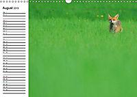 Auf den Spuren der Stadtfüchse (Wandkalender 2019 DIN A3 quer) - Produktdetailbild 8