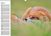 Auf den Spuren der Stadtfüchse (Wandkalender 2019 DIN A3 quer) - Produktdetailbild 7