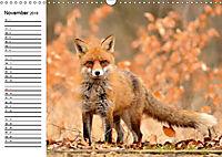 Auf den Spuren der Stadtfüchse (Wandkalender 2019 DIN A3 quer) - Produktdetailbild 11
