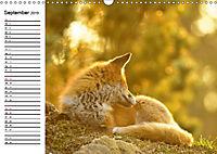 Auf den Spuren der Stadtfüchse (Wandkalender 2019 DIN A3 quer) - Produktdetailbild 9