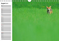 Auf den Spuren der Stadtfüchse (Wandkalender 2019 DIN A4 quer) - Produktdetailbild 8