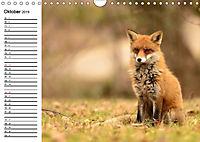 Auf den Spuren der Stadtfüchse (Wandkalender 2019 DIN A4 quer) - Produktdetailbild 10