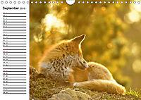Auf den Spuren der Stadtfüchse (Wandkalender 2019 DIN A4 quer) - Produktdetailbild 9