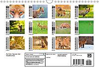 Auf den Spuren der Stadtfüchse (Wandkalender 2019 DIN A4 quer) - Produktdetailbild 13