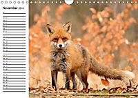 Auf den Spuren der Stadtfüchse (Wandkalender 2019 DIN A4 quer) - Produktdetailbild 11