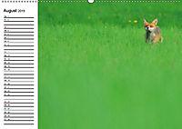 Auf den Spuren der Stadtfüchse (Wandkalender 2019 DIN A2 quer) - Produktdetailbild 8