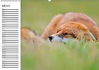 Auf den Spuren der Stadtfüchse (Wandkalender 2019 DIN A2 quer) - Produktdetailbild 7
