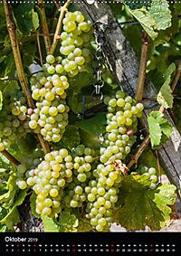 Auf der Weininsel Sommerach und Nordheim (Wandkalender 2019 DIN A2 hoch) - Produktdetailbild 10