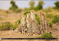 Auf Safari in Kenia 2019 (Wandkalender 2019 DIN A2 quer) - Produktdetailbild 7