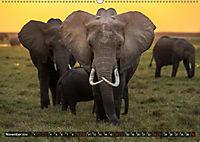 Auf Safari in Kenia 2019 (Wandkalender 2019 DIN A2 quer) - Produktdetailbild 11