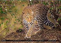Auf Safari in Kenia 2019 (Wandkalender 2019 DIN A2 quer) - Produktdetailbild 6