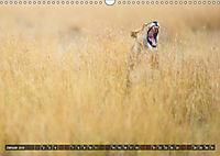 Auf Safari in Kenia 2019 (Wandkalender 2019 DIN A3 quer) - Produktdetailbild 1