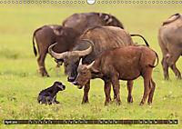 Auf Safari in Kenia 2019 (Wandkalender 2019 DIN A3 quer) - Produktdetailbild 4
