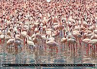 Auf Safari in Kenia 2019 (Wandkalender 2019 DIN A3 quer) - Produktdetailbild 5