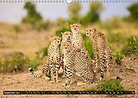 Auf Safari in Kenia 2019 (Wandkalender 2019 DIN A3 quer) - Produktdetailbild 9