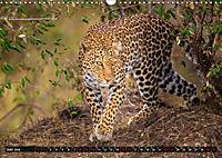 Auf Safari in Kenia 2019 (Wandkalender 2019 DIN A3 quer) - Produktdetailbild 6