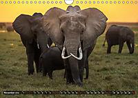 Auf Safari in Kenia 2019 (Wandkalender 2019 DIN A4 quer) - Produktdetailbild 11