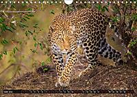 Auf Safari in Kenia 2019 (Wandkalender 2019 DIN A4 quer) - Produktdetailbild 6