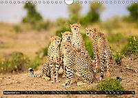 Auf Safari in Kenia 2019 (Wandkalender 2019 DIN A4 quer) - Produktdetailbild 9