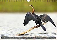 Auf Safari in Kenia 2019 (Wandkalender 2019 DIN A4 quer) - Produktdetailbild 8