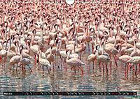 Auf Safari in Kenia 2019 (Wandkalender 2019 DIN A4 quer) - Produktdetailbild 5