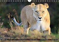 Auf Safari in Kenia 2019 (Wandkalender 2019 DIN A4 quer) - Produktdetailbild 10