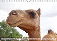 australisch - anders - wunderbar (Wandkalender 2019 DIN A4 quer) - Produktdetailbild 9