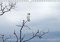 australisch - anders - wunderbar (Wandkalender 2019 DIN A4 quer) - Produktdetailbild 12