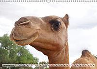 australisch - anders - wunderbar (Wandkalender 2019 DIN A3 quer) - Produktdetailbild 9