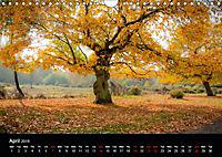 Autumn Colours (Wall Calendar 2019 DIN A4 Landscape) - Produktdetailbild 4