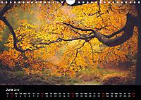 Autumn Colours (Wall Calendar 2019 DIN A4 Landscape) - Produktdetailbild 6