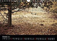 Autumn Colours (Wall Calendar 2019 DIN A4 Landscape) - Produktdetailbild 10