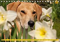Azawakh-Ridgeback Hund in gelb (Tischkalender 2019 DIN A5 quer) - Produktdetailbild 3