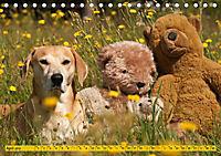 Azawakh-Ridgeback Hund in gelb (Tischkalender 2019 DIN A5 quer) - Produktdetailbild 4