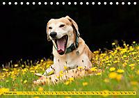 Azawakh-Ridgeback Hund in gelb (Tischkalender 2019 DIN A5 quer) - Produktdetailbild 2