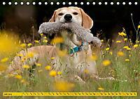Azawakh-Ridgeback Hund in gelb (Tischkalender 2019 DIN A5 quer) - Produktdetailbild 7