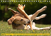 Azawakh-Ridgeback Hund in gelb (Tischkalender 2019 DIN A5 quer) - Produktdetailbild 8