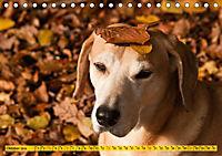 Azawakh-Ridgeback Hund in gelb (Tischkalender 2019 DIN A5 quer) - Produktdetailbild 10