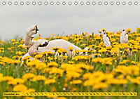 Azawakh-Ridgeback Hund in gelb (Tischkalender 2019 DIN A5 quer) - Produktdetailbild 12