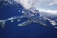 Azoren - Auf den Spuren von ... Entdeckern - Walen - Vulkanen - Produktdetailbild 4