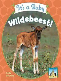 Baby African Animals: It's a Baby Wildebeest!, Kelly Doudna