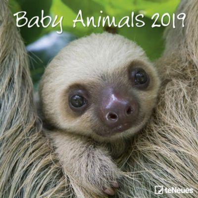 Baby Animals 2019