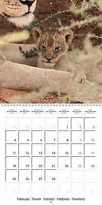 Baby Animals - Lions (Wall Calendar 2019 300 × 300 mm Square) - Produktdetailbild 2