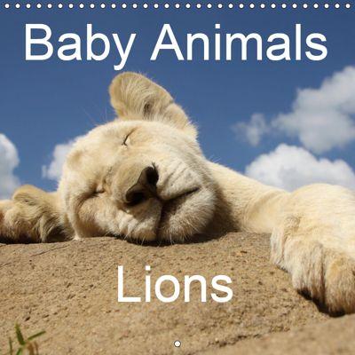 Baby Animals - Lions (Wall Calendar 2019 300 × 300 mm Square), Stefan Sander