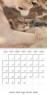Baby Animals - Lions (Wall Calendar 2019 300 × 300 mm Square) - Produktdetailbild 1