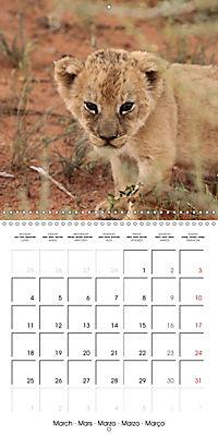 Baby Animals - Lions (Wall Calendar 2019 300 × 300 mm Square) - Produktdetailbild 3